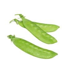 2021 New Harvest Hot Selling Good Chinese Fresh Green Sugar Snap Pea