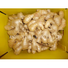 Fresh Ginger/Air Dry Ginger in Anqiu China
