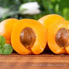 Collations saines de grande taille Noix d'abricot hautement nutritives