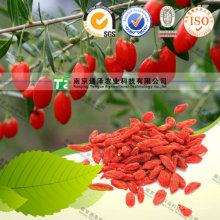 Hersteller Versorgung Kräutermedizin Barbary Wolfberry Fruit Goji Beere