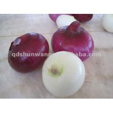 chinese fresh round yellow onion