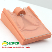 VENDER 12445 Modelo de Orientação Contraceptiva em Ciências Médicas para a Escola