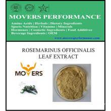 Hot Slaes Ingrédient cosmétique: extrait de feuilles de Rosmarinus Officinalis