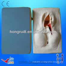 2013 HOT SALE treinamento suturado para vagina modelo