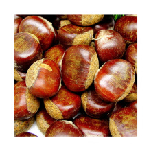 2021 New Good Quality Natural Harvest Carrots Export Chinese Fresh Chestnut