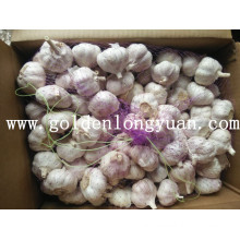 Fresh Normal White Garlic Packed with Carton
