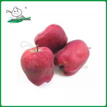 Manzana huaniu / manzana roja deliciosa