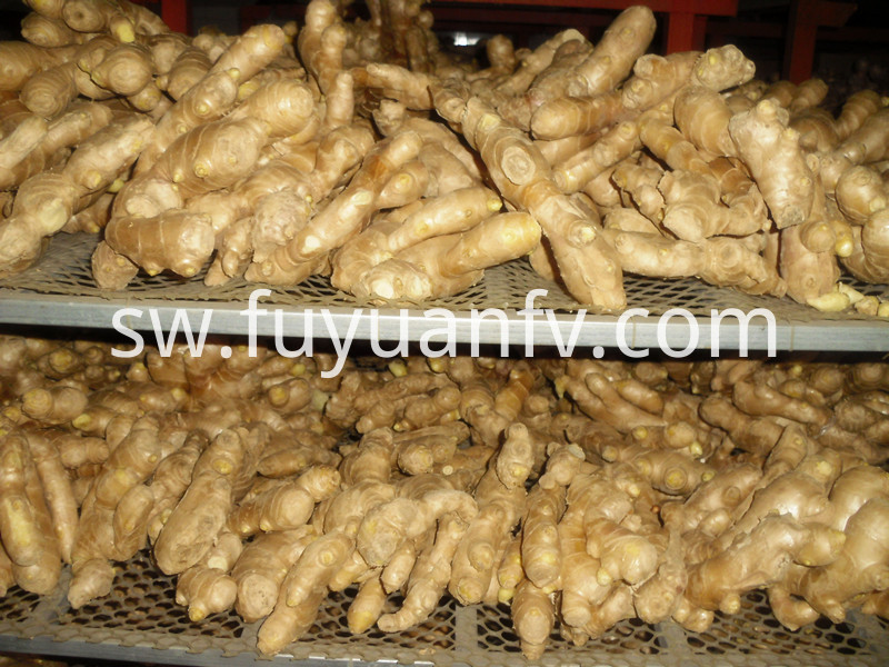 fat air dried ginger