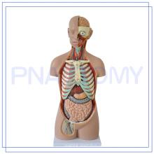PNT-0311 85 CM modelo de anatomia modelo de anatomia 3d torso do pescoço da cabeça Humana médica
