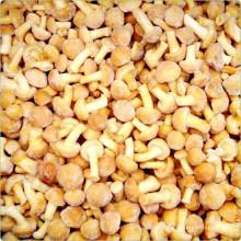 High Quality Best Price for IQF Nameko Mushroom