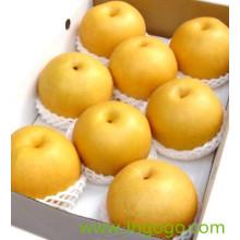 Chinês Novo Crop Fresh Boa Qualidade Pêra