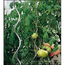 Tomaten-Spiraldraht