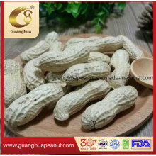 New Crop 2020 Raw Peanut in Shell Seaflower Luhua