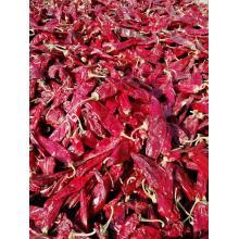 Dry Hong Long 23  Paprika Pods