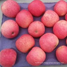 Alta calidad de rojo fresco FUJI Apple