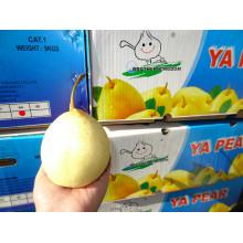 Fresh pears/New fresh ya pear/Fresh ya pear
