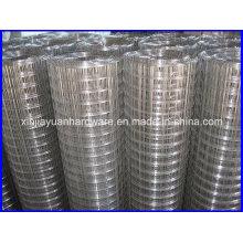 Plain Weave soldadas malha de arame galvanizado e galvanizado Electro