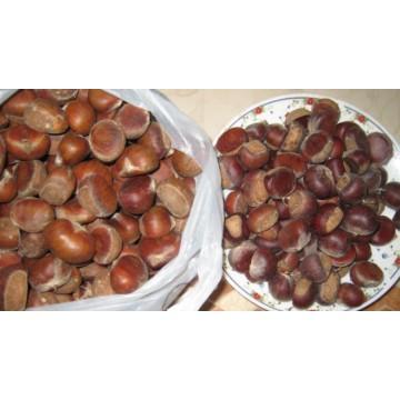 Chestnut fresco cru orgânico com preço mais competitivo