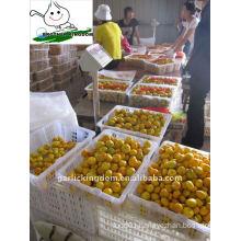 Fresh Baby Mandarin