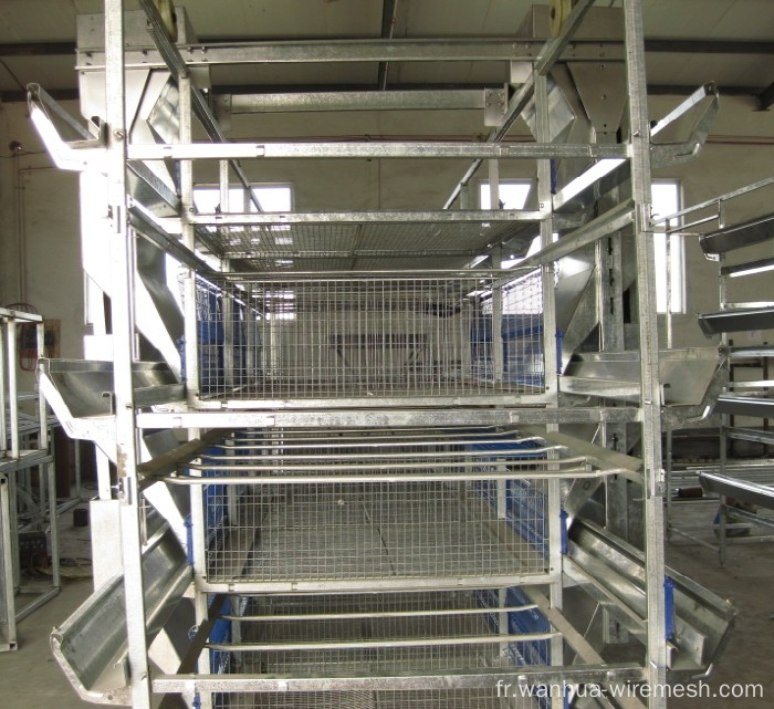 Wholesale cages d'oeufs de poulet cages