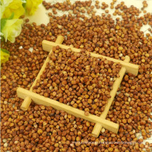Red Sorghum With Best Price