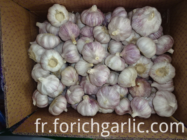 Fresh Garlic Best Price