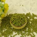 Getrocknete kleine grüne Mungobohne