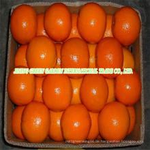 Frische erste Qualität Navel Orange