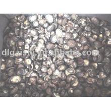Cogumelos shitake
