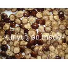 Champignons Shiitake en conserve avec haute qualité