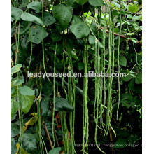 MBE04 Fengkai early maturity yard long bean seeds, chinese bean seeds