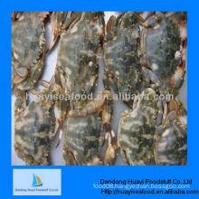 fresh frozen mud crab supplier