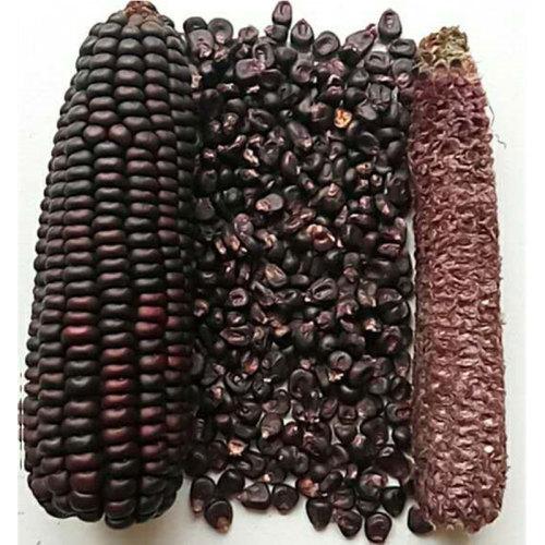 Hot sale best quality sweet fresh black Corn