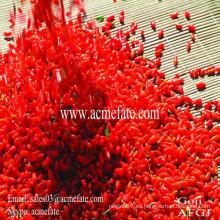 100% bayas naturales de Qinghai Goji orgánico