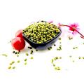 Neuer Entwurf grüner Mungobohnenernter trocken