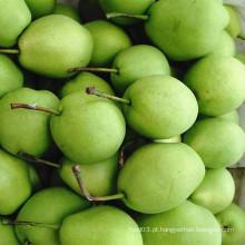 Pera verde de Shandong para o mercado de India
