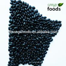 Wholesale Chine importateurs, haricot noir