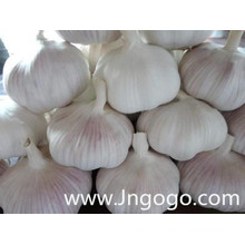 Alho branco fresco de boa qualidade nova colheita chinesa