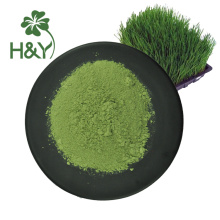 Competitive barley grass powder price barley grass powder