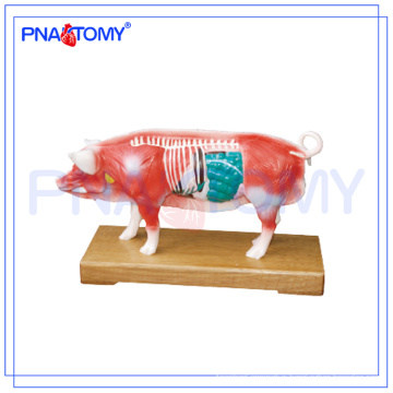 PNT-AM41 Pig Acupuncture Model animal anatomical model