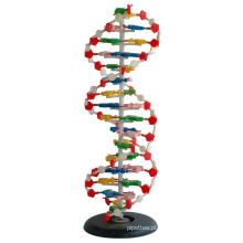 Médico e modelo de ensino modelo de DNA 1 parte