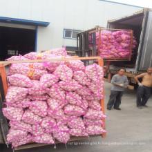 2016 Shandong Ail frais avec la meilleure vente chaude de qualité