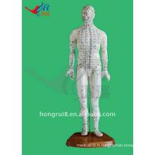 HR-505 Human Acupuncture Point Model 46CM, acupuncture et modèle