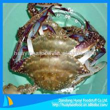 live mud crabs frozen crabs