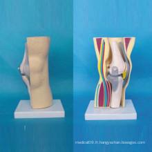 Modèle de fonction anatomique médicale squelette articulaire du genou humain (R040106)
