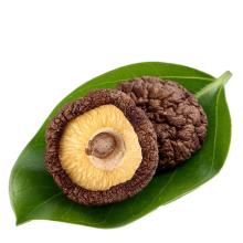 Wholesale High Quality Dried Shiitake Mushroom