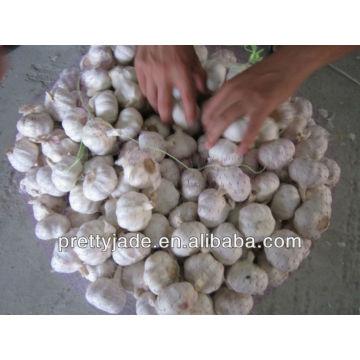 coldroom garlic