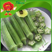 Okra orgánica congelada nuevo del cultivo para la venta