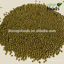 Frijoles verdes frescos con precio competitivo