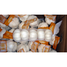 Exportar buena calidad ajo blanco puro